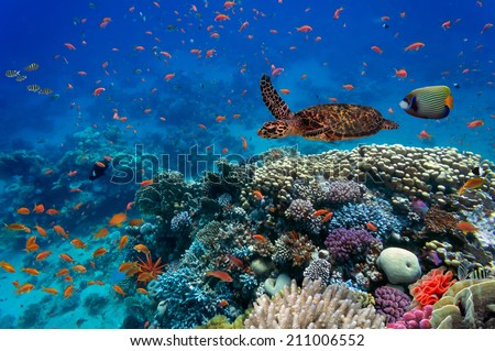 Tropical fish and turtle in the Red Sea, Egypt - stock photo