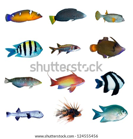 Tropical fish collection on white background. - stock photo