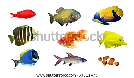Tropical fish - collection on white background - stock photo