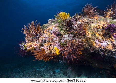 Tropical fish, corals and sponges around a thriving tropical coral reef. - stock photo