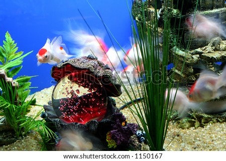 Tropical Fish Motion Blur - stock photo