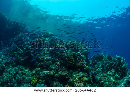 Tropical fish on background of a coral reef - stock photo