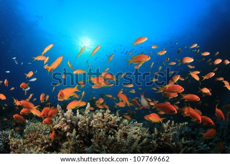 Tropical Fish on coral reef - stock photo