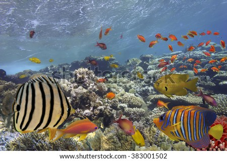 Tropical Fish on Coral Reef in the Red Sea? - stock photo