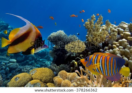 Tropical Fish on Coral Reef in the Red Sea. Red Sea, Egypt