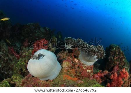 Tropical fish on coral reef underwater in ocean - stock photo