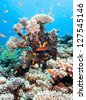 Tropical fish swimming around a hard coral pinnacle in the Red Sea - stock photo