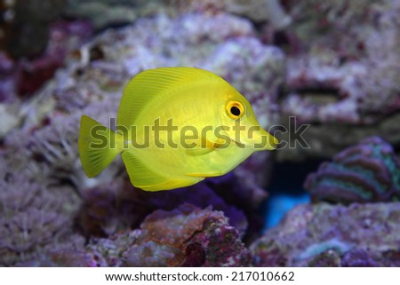 tropical fish that lives in coral reefs