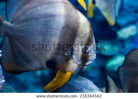 Tropical fish under the water - stock photo