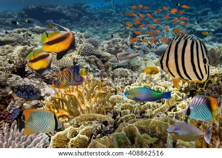 tropical Fish. Underwater world, Red Sea, Egypt.