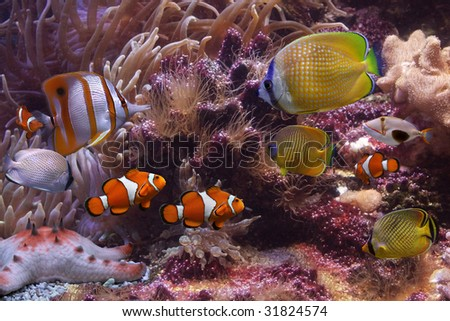 Tropical fishes - stock photo