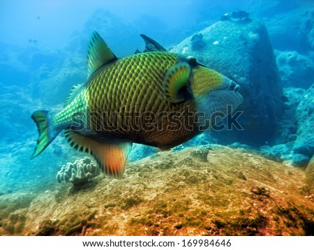 tropical fishes over a coral reef