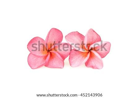 Tropical flower frangipani isolated on white background - stock photo