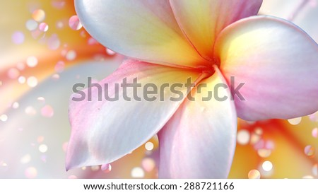Tropical flower plumeria and bokeh lights. - stock photo