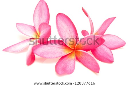 tropical flowers and petals on white - stock photo