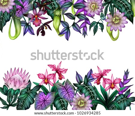 Tropical flowers border tropical plants frame stock illustration tropical flowers border tropical plants frame isolated on white background tropical flowers background mightylinksfo