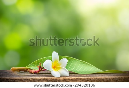 Tropical flowers frangipani on wood ,background of plumeria and blur bokeh background ,Space for design - stock photo
