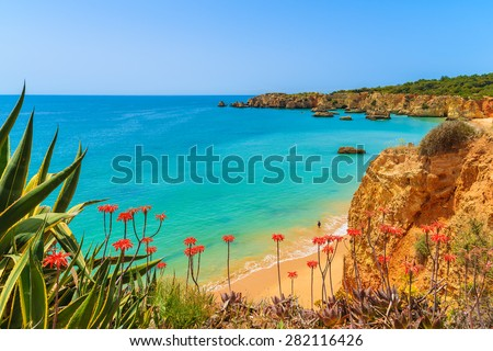 Tropical flowers on beautiful Praia da Rocha beach, Algarve region, Portugal - stock photo