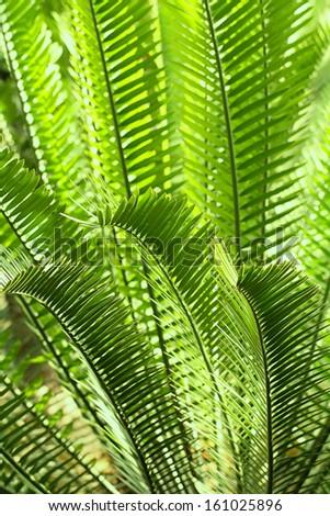tropical foliage - stock photo