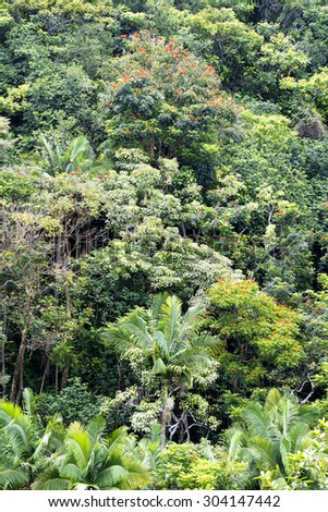Tropical foliage along a rainforest mountainside in Hawaii shows a lush display of rich, healthy plant and tree life.  - stock photo