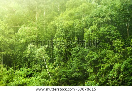 Tropical forest in morning mist, Malaysia, Asia. - stock photo