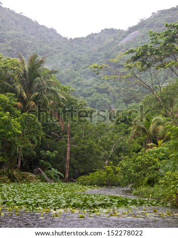 Tropical forest in rainy weather - stock photo
