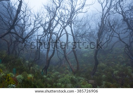 tropical forest in the fog, mysterious path in a foggy wood in madeira - stock photo