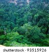 Tropical forest in the Queen Elizabeth National Park in Uganda (Africa) - stock photo