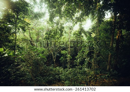 Tropical forest jungle on Bali, Indonesia. Ubud park - stock photo