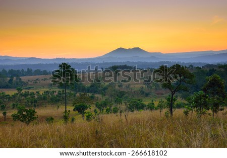 Tropical forest landscape at sunrise - stock photo
