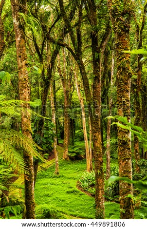 Tropical forest, trees. Bali - stock photo