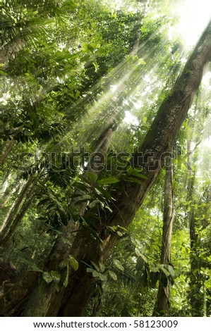 Tropical forest with ray of sunlight - stock photo