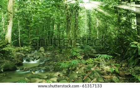 tropical forest with river in the morning sunlight - stock photo