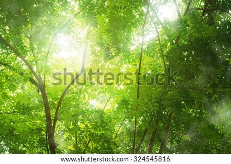 Tropical forest with softly sunlight, look warm and moist. - stock photo