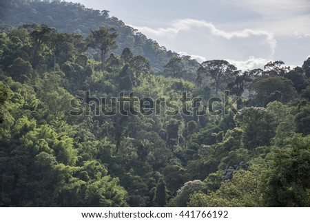 Tropical forests. - stock photo