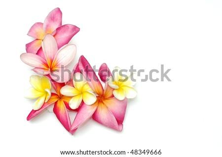 Tropical frangipani border - stock photo