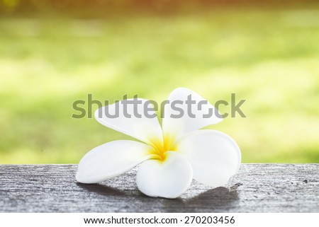 Tropical Frangipani on wooden table for spa concept - stock photo