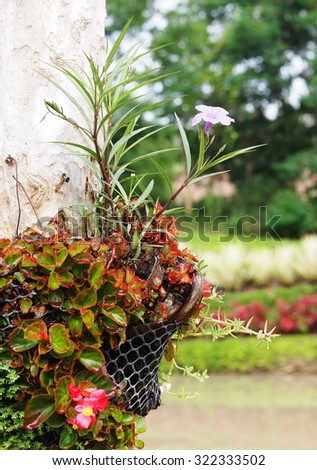 tropical garden decorative plant with large bright purple flower creeping on a big tree with brown bark and other colorful leaves outdoor in nature under natural sunlight and bokeh background - stock photo