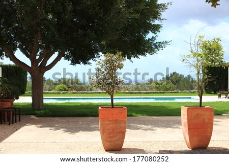 Tropical garden with a cool blue swimming pool and potted plants standing on a sunny patio overlooking the pool and shade trees - stock photo