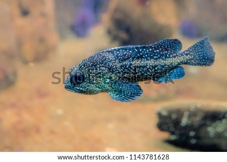 stock-photo-tropical-glow-in-a-dark-blue
