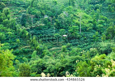 tropical hill with plants