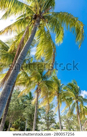 Tropical image with palm trees in the blue sunny sky - stock photo