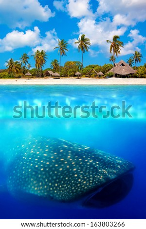 Tropical island and whale shark - above and below water - stock photo