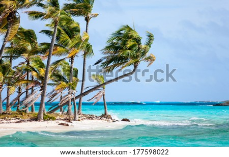 Tropical island in Bahamas with palm trees on a beach