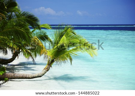tropical island palm sea and sky - stock photo