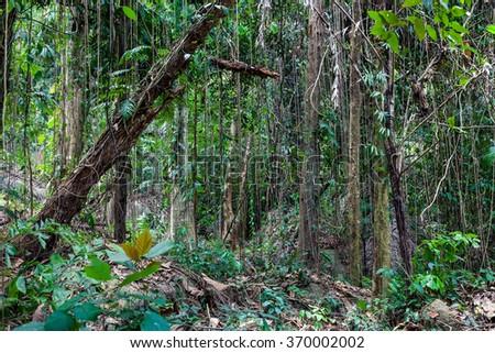 Tropical jungle. - stock photo