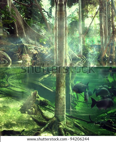 Tropical jungle - stock photo