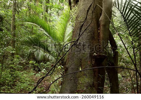 Tropical jungle forest - stock photo