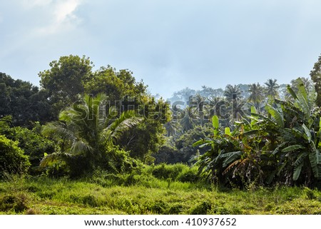 tropical jungle landscape under bright sun