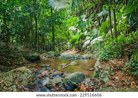 tropical jungles of South East Asia - stock photo